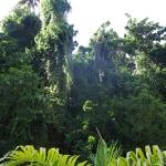 ГЛОНАСС работает на Барбадосе