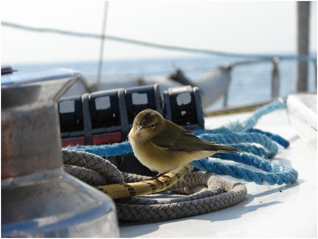Птицы на палубе яхты Дельта