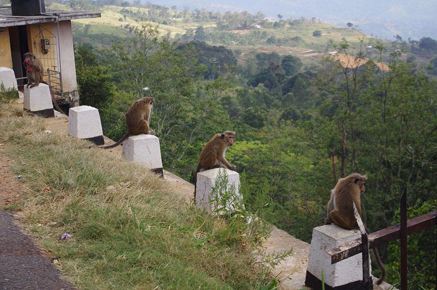 Шри-Ланка — поездка по стране. День второй.