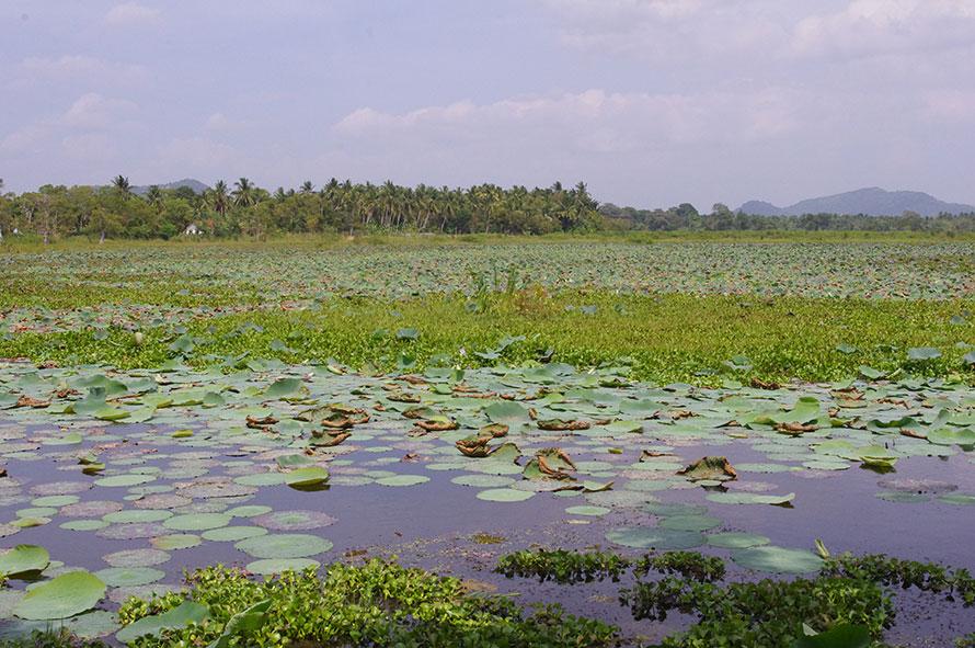 Шри-Ланка — поездка по стране. День последний.