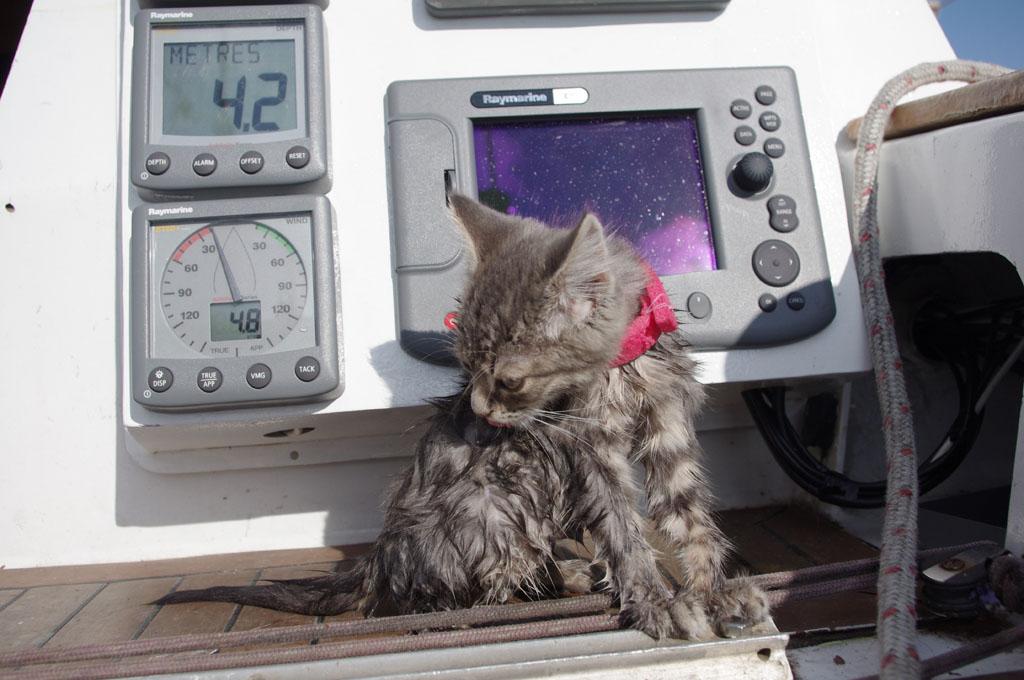 Кот Глонасс умеет плавать