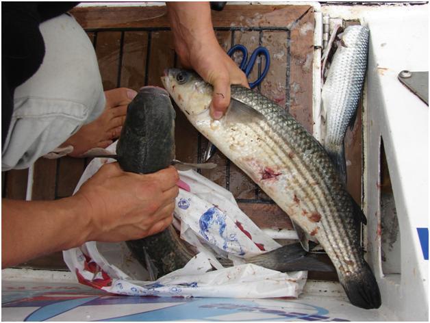 Наловили рыбы